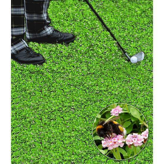 """Garten-Welt Lippia """"Summer Pearls®"""" rosa, 4 Pflanzen rosa"""