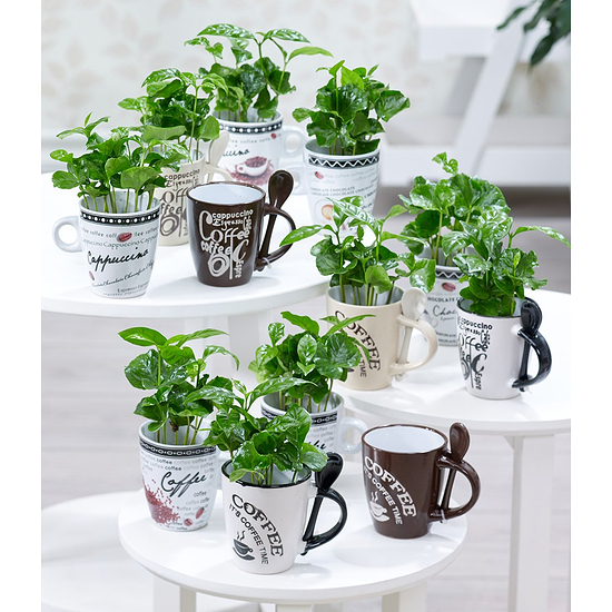 Garten-Welt Coffea Arabica mit Kaffeetasse , 1 Set grün