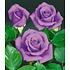 """Garten-Welt Rose """"Blue Saphir"""", 1 Pflanze blau (1)"""