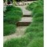 Garten-Welt Bärenfellgras , 3 Pflanzen grün (1)