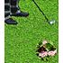 """Garten-Welt Lippia """"Summer Pearls®"""" rosa, 4 Pflanzen rosa (1)"""