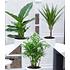 Garten-Welt Luftreinigender Zimmer pflanzen-Mix, 3 Pflanzen grün (1)