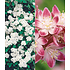 Garten-Welt 5 Meter Blüh-Hecken- Kollektion, 6 Pflanzen mehrfarbig (6)