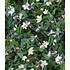 Garten-Welt Kaviar-Limette 1 Pflanze grün (5)