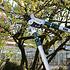 Siena Garden Astschere Pro Alu CL210s silber (2)