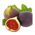 "Garten-Welt Frucht-Feige ""Rouge de Bordeaux"" groß, 1 Pflanze lila (2)"