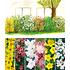 Garten-Welt 5 Meter Blüh-Hecken- Kollektion, 6 Pflanzen mehrfarbig (2)
