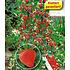 Garten-Welt Beeren-Kollektion , 4 Pflanzen mehrfarbig (2)