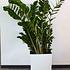 Siena Garden Pflanzkübel Marle eckig, 40x40x41,5 cm weiß (4)