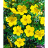 Garten-Welt 5 Meter Blüh-Hecken- Kollektion, 6 Pflanzen mehrfarbig (4)