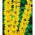 Garten-Welt 5 Meter Blüh-Hecken- Kollektion, 6 Pflanzen mehrfarbig (3)